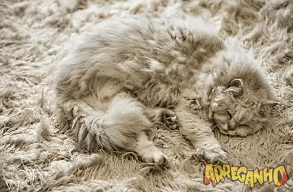 8 animais que quase foram brutalmente pisados