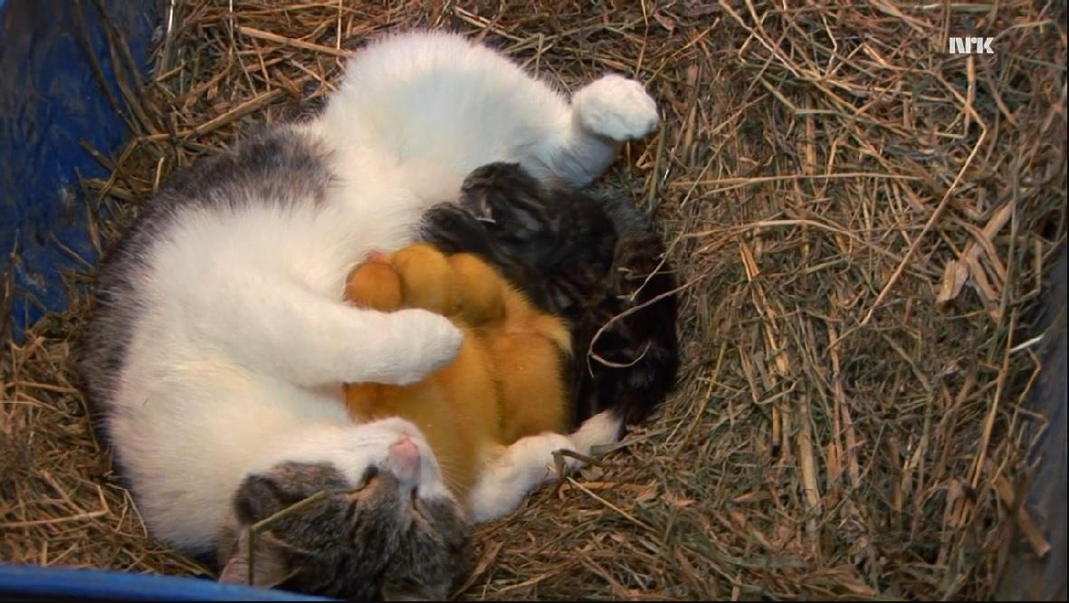 Essa gata adotou animais totalmente diferentes da sua espécie!