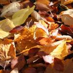 Herbstlaub leuchtet in der Sonne