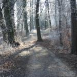 Waldweg mit bereiften Bäumen