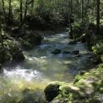 Der Fluss Torren bei Golling