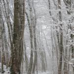 Weg nach einem Schneesturm im Bergener Wald