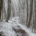 Waldweg mit frischem Schnee