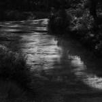 Schmaler Waldweg im Streiflicht
