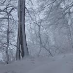 Beschneite Bäume