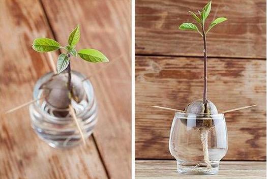 Como fazer mudas decorativas de plantas em vasos