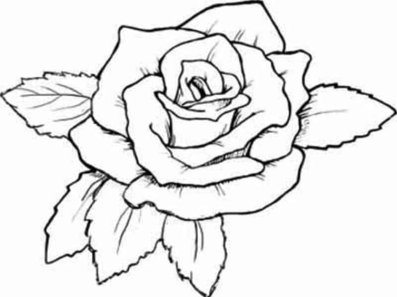 tattoo level diagram of paint