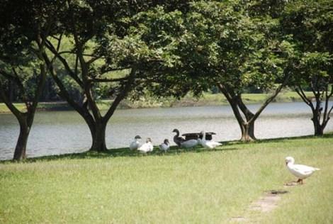 Parque Ecológico do Tiet~e