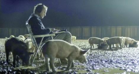 Upstream Pigs