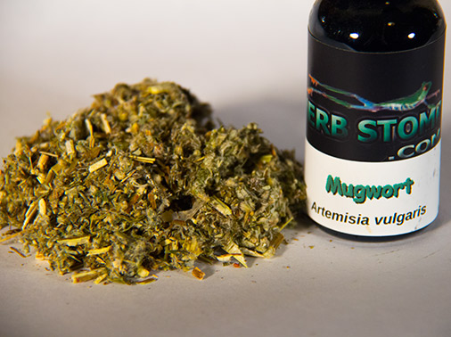 Herbstomp-mugwort-tincture