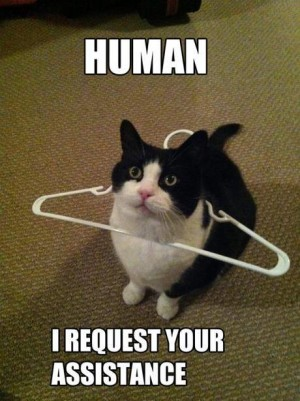 Cat in a hanger