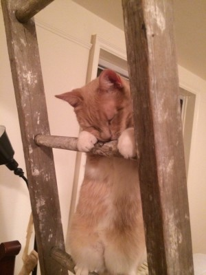 Cat sleeping on ladder