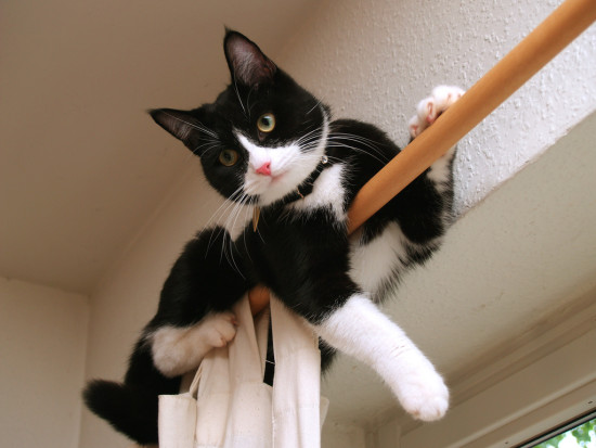 Cat on curtain rail