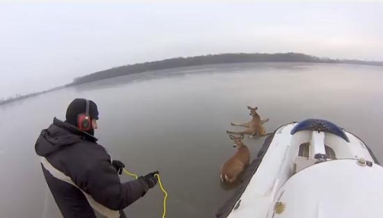 Deer Rescue on Frozen Lake