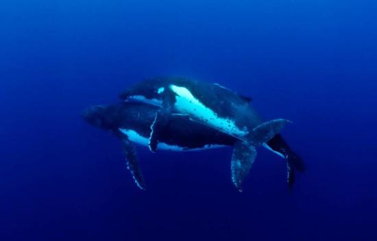 Whale Sex