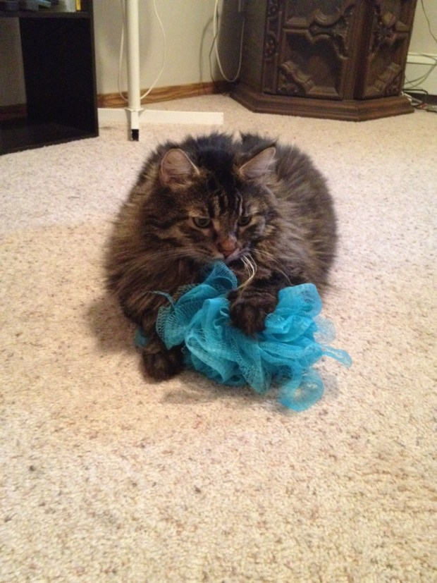 Cat and his loofah