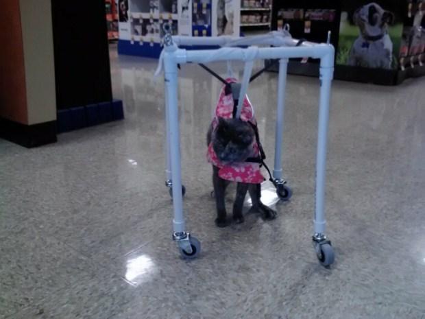 "MayMay in her ""MayMay Mobile"" wheelchair. Photo courtesy of Keli Halteman/Halteman's"