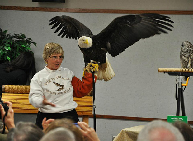 Back to the Wild ambassador American Bald Eagle with founder...Photo courtesy of Back to the Wild