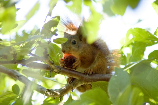 Squirrel appreciation day: Squirrel in tree eating