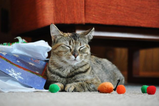 sleeping in: cat sleeping