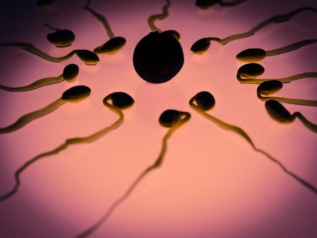 Photo of sperm and egg