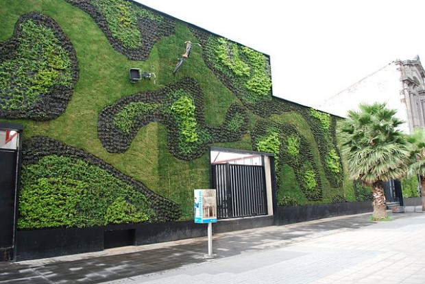 Photo of green wall in Mexico City