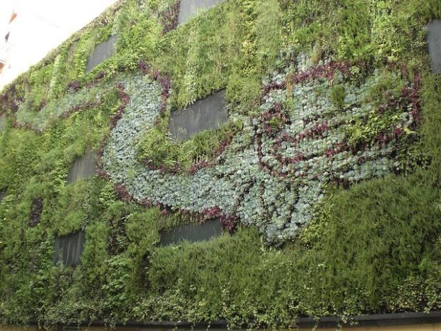 Photo of vertical garden in Mexico City