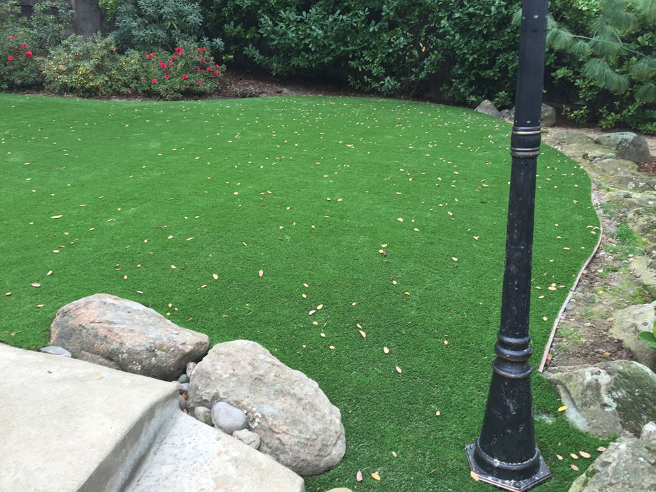 Lawn Services Lockhart, Florida Landscaping Business, Backyard