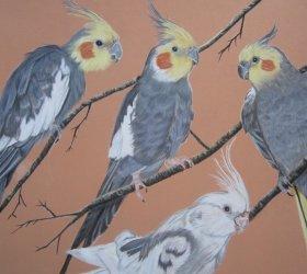 oiseaux-pastels