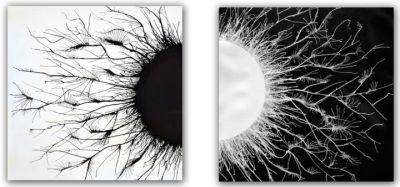 Opposites (Sumit Mehndiratta)