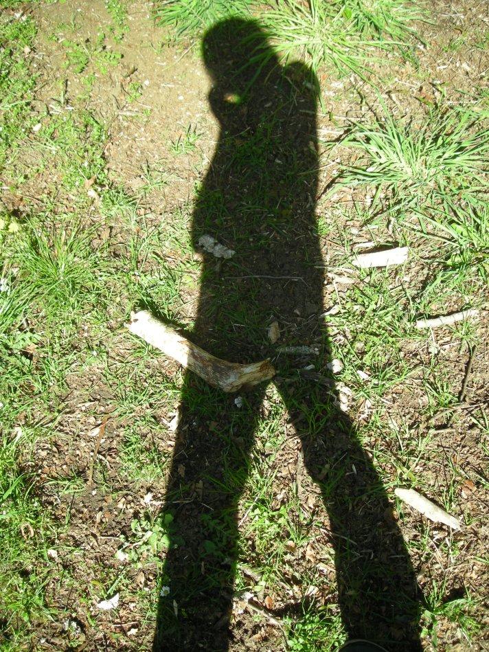 shadow-plant-13