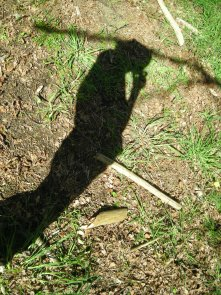 shadow-plant-17