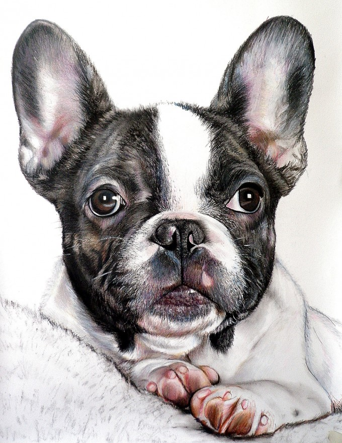 Dream Quotes Wallpaper Portraits Of Dogs Art People Gallery