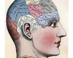 The Myths Involved In Studying The Brain