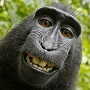 Should A Monkey Own Copyright For A Selfie It Took? PETA Says Yes, And Sues On The Monkey's Behalf