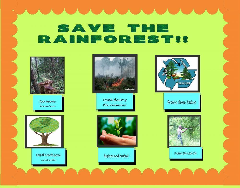 Make a Science Fair Project About Amazon Rainforest Environmental
