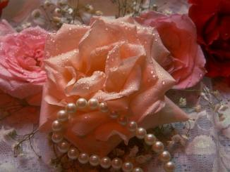 close-up-of-pink-and-red-roses-with-a-string-of-pearls