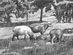 """Sheep on the Commons"" by Kay Sluterbeck, china marker on grey paper.  Pictures in black, white, and shades of grey give an accurate representation of the effects of light.  Although we know the sheep are white, the sunlight and shadows affect their appearance dramatically."