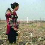 아기를 업은 여성이 옥수수 밭에서 떨어진 열매를 줍고 있다
