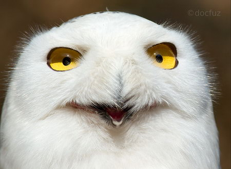 Laughing Wallpaper With Quotes 21 Best Funny Birds Pictures