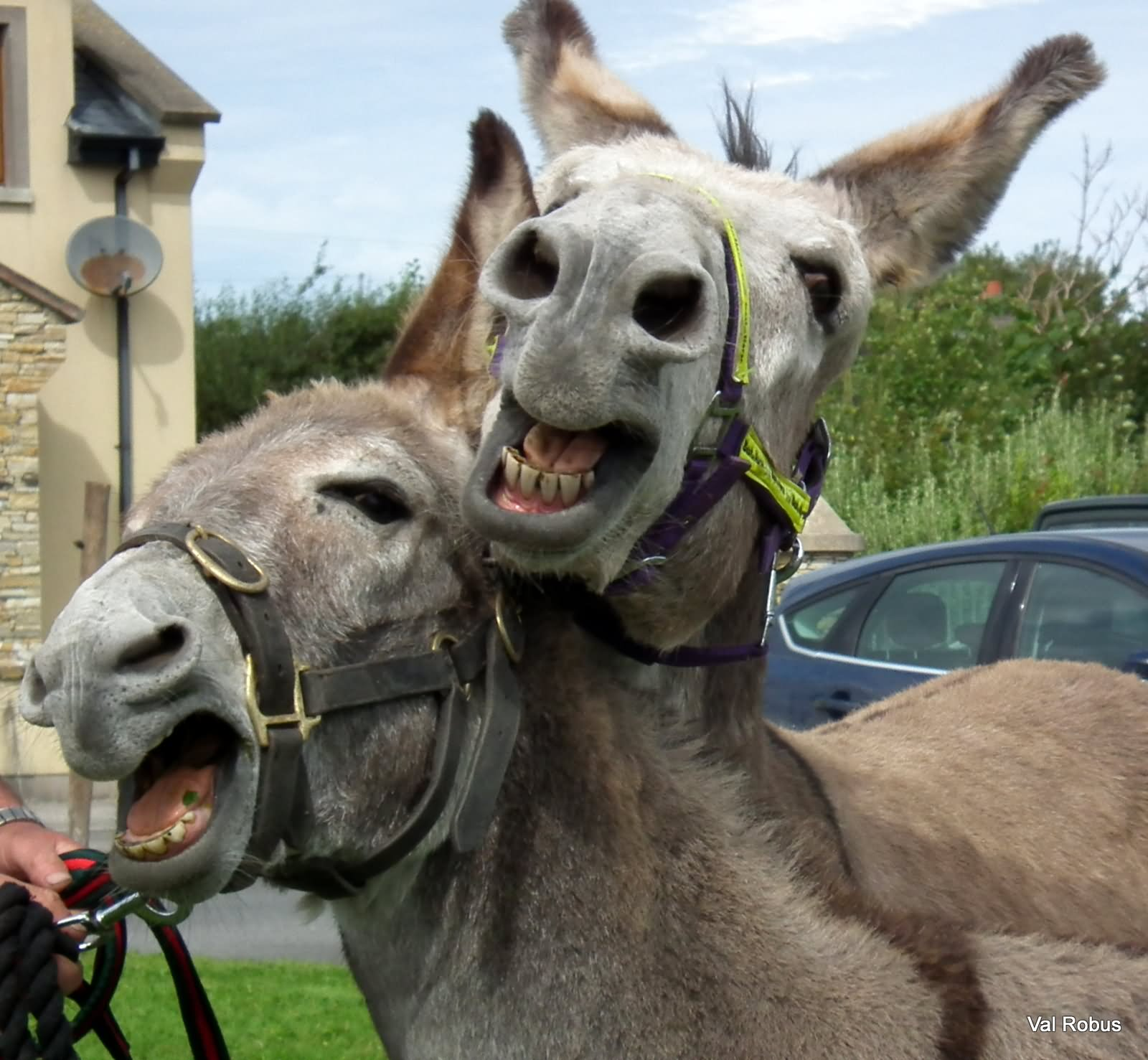 Cute Love Couple Wallpaper For Whatsapp 27 Funny Donkey Pictures
