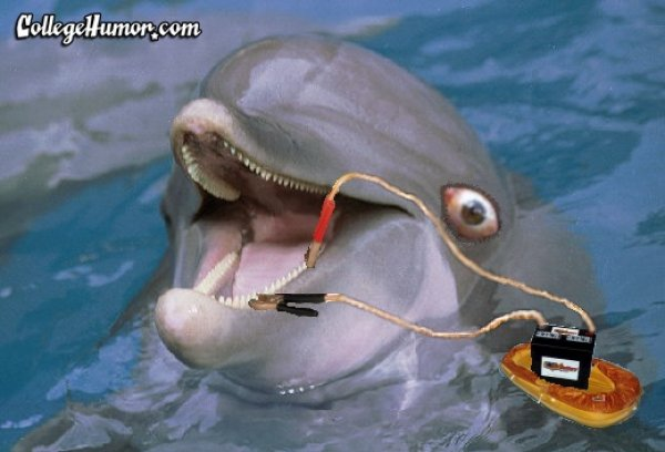 Very Cute Baby Couple Wallpaper Battery Charging Funny Dolphin