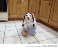 50 Most Funniest Pet Costumes On The Internet