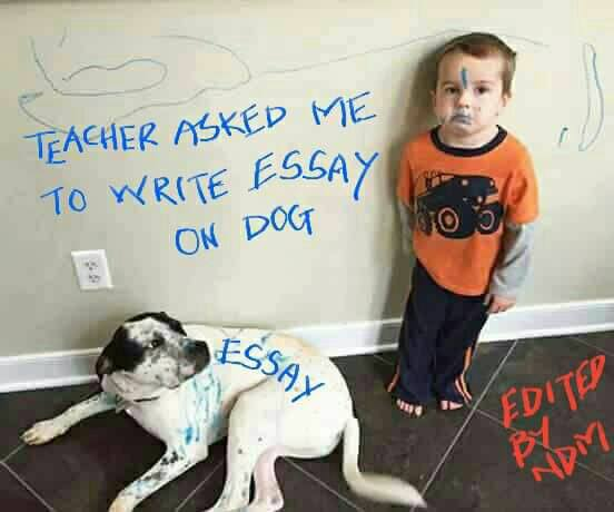 Teacher asked me to write an essay on dog - write the essay for me