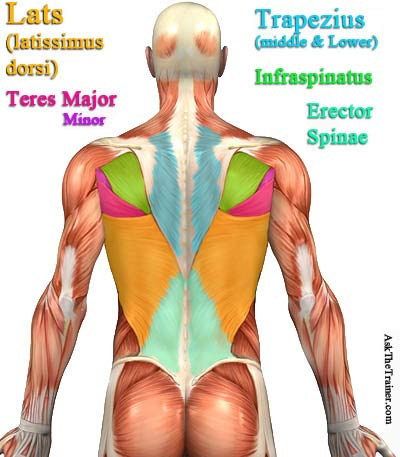 Best Back Exercise for Your Lats Muscle How to Strengthen / Build Lats