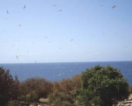 Proliferación de las aves.