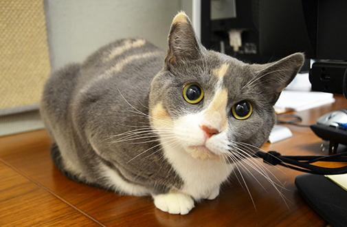 Cute Dental Wallpaper Cat Nutrition Tips Aspca