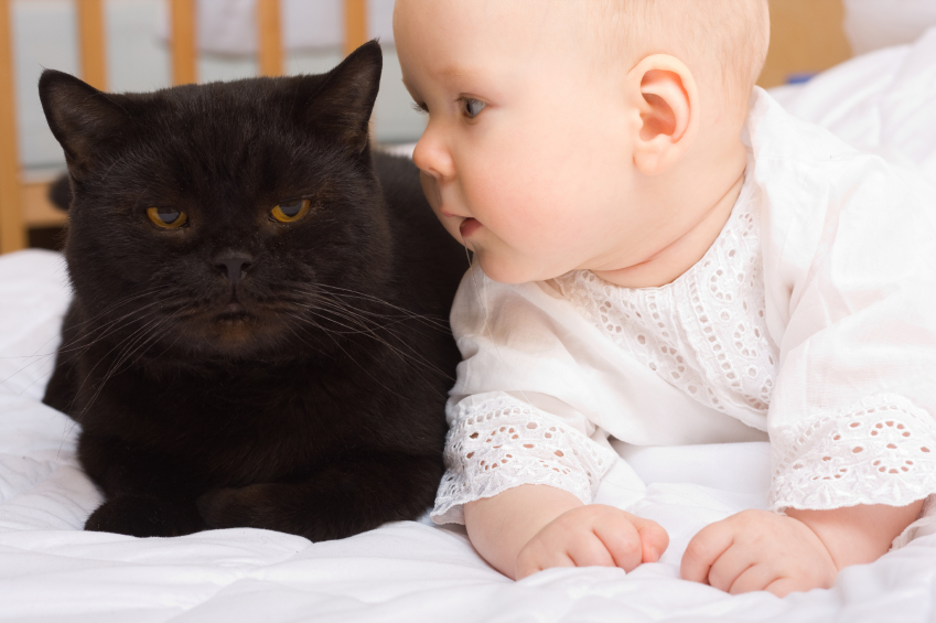 Cats And Babies Aspca