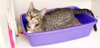 Litter Box Problems | ASPCA