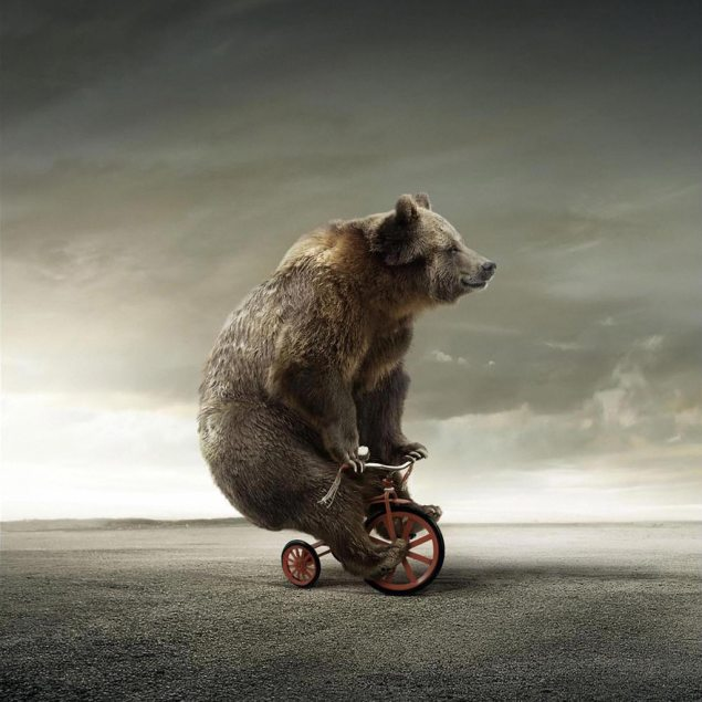 bear-on-tricycle